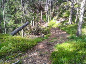 Berglauf Training durch den Wald