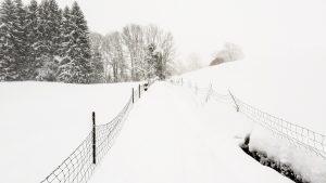 Lauftraining im Winter durch den Schnee