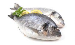 Fisch und Eiweiss