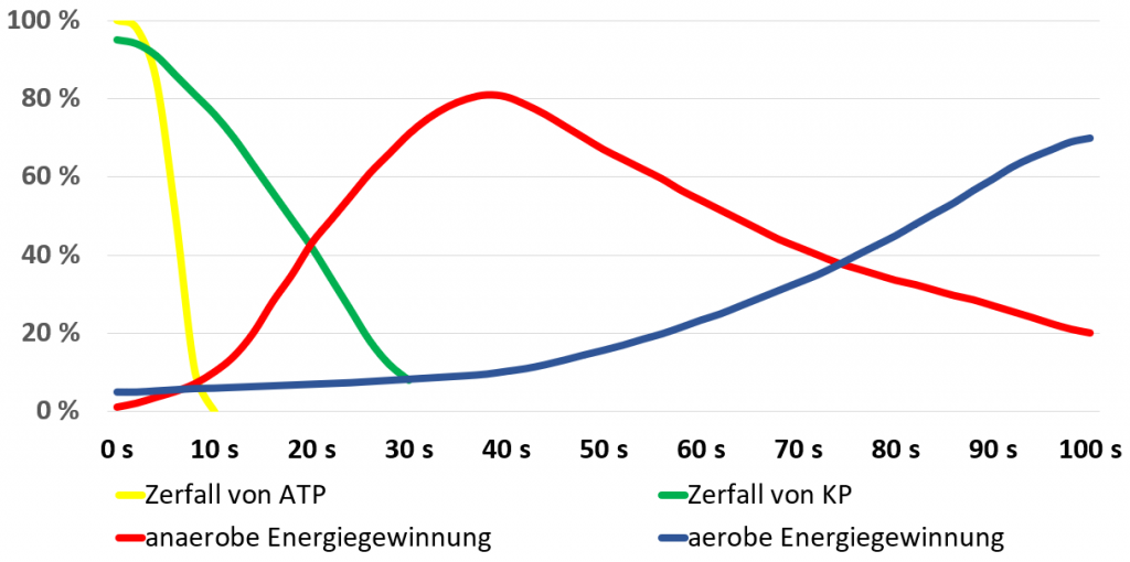 Zerfall von ATP Energiestoffwechsel