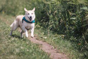 Hundebegegnungen LaBruixa Picabay